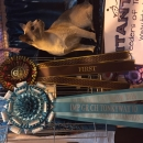 Supreme Cat Show 2016 - Gained her Imperial title