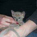 Io at 5 weeks Old