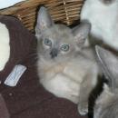 Io at 8 weeks Old