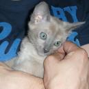 Io at 9.5 weeks Old