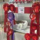 Somerset & West Country Show 2016