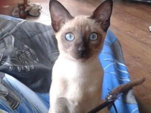 Pandora Kitten 2